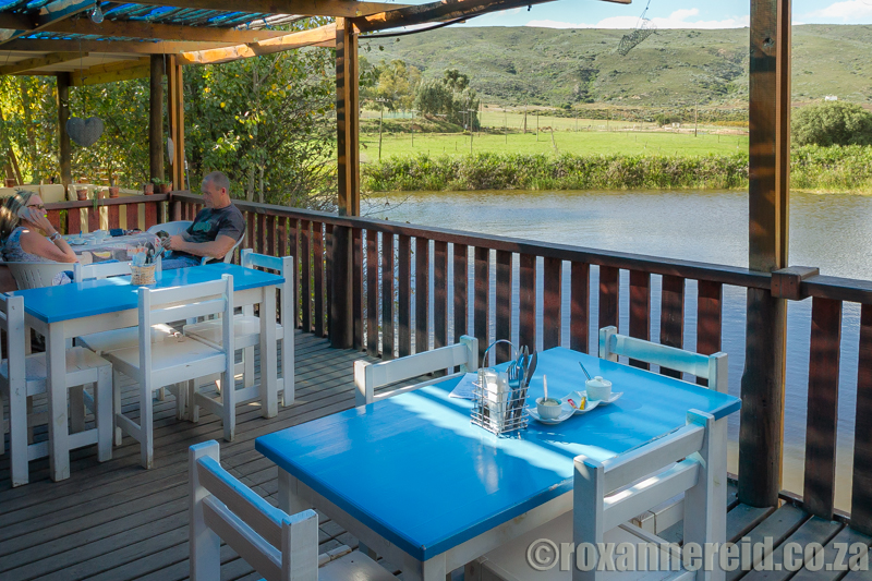 The Blue Cow, Barrydale