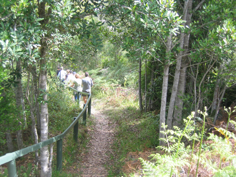 Hiking in the Knysna forests, Garden Route