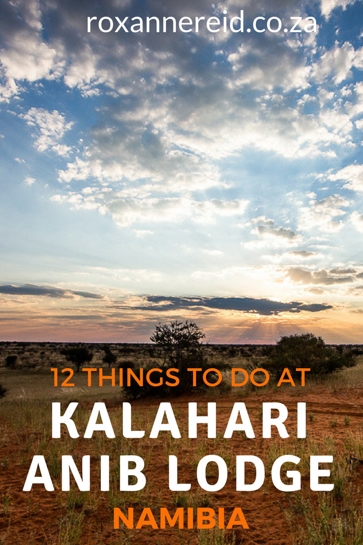 12 things to do at Kalahari Anib Lodge near Mariental in the Kalahari Namibia. Explore this Kalahari accommodation, one of the lodges near Mariental. Find lots to do from stargazing, walking trails, guided walks, guided 4x4 drives and sunset drives to ebiking, swimming, good food and sundowners. Mariental lodge, Namibian holidays, Kalahari activiites, Kalahari lodge, Kalahari Namibia accommodation #Kalahari #Namibia #KalahariNamibia #KalahariAnibLodge