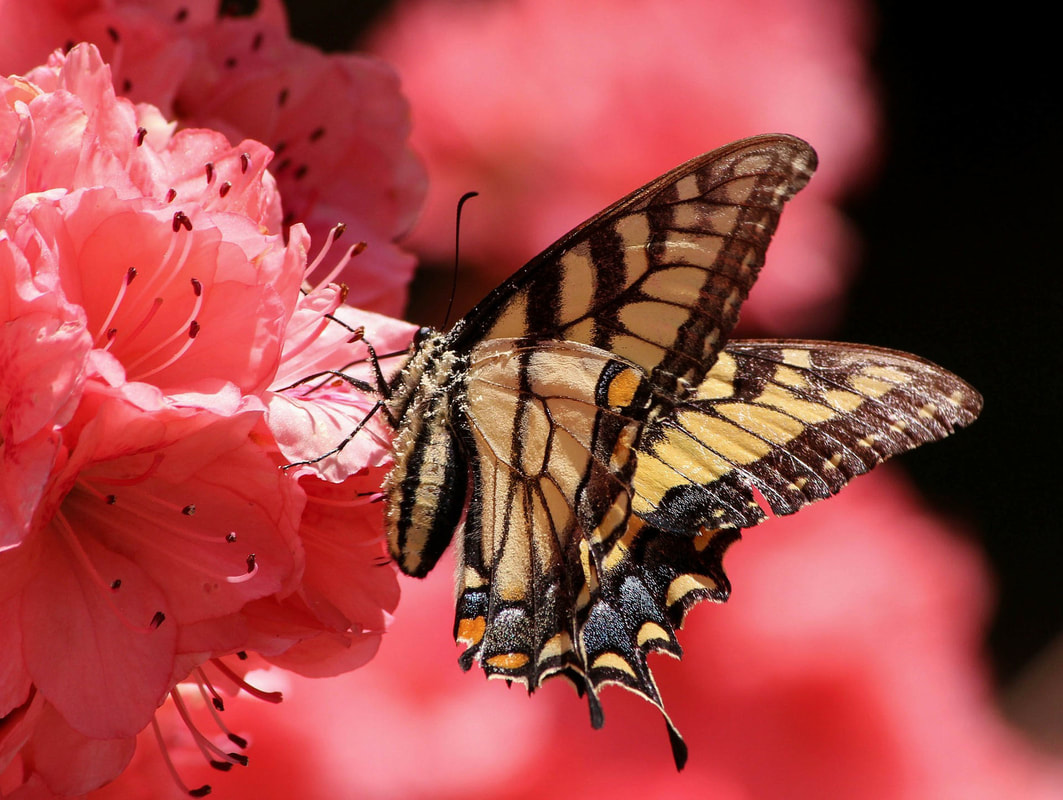 10 fun facts about butterflies