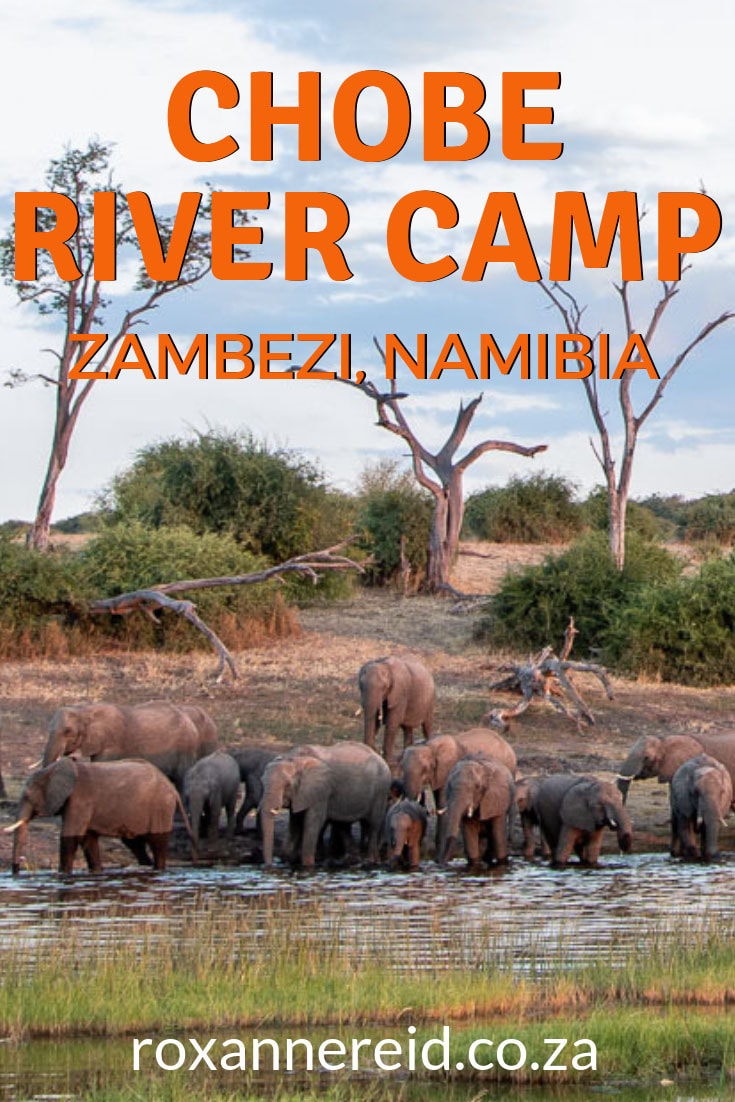 Did you know you can visit Chobe National Park from the Namibian side of the river? Choose Chobe River Camp in the Zambezi Region Namibia (formerly Caprivi) as your Namibia accommodation; it's only 4km from the Ngoma border post into Botswana. Visit Chobe National Park, Victoria Falls, enjoy a Chobe River cruise, nature walk, canoeing, fishing and birding. #Chobe River #ZambeziRegionNamibia #Capriviaccommodation