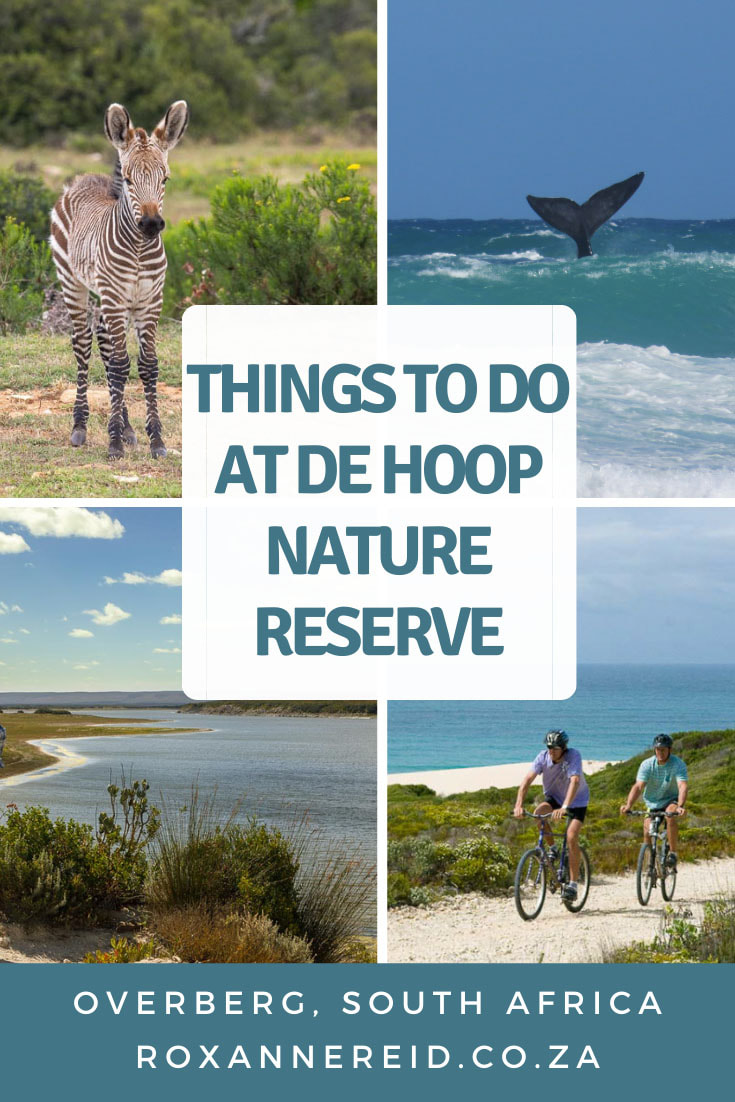 Planning a visit to De Hoop Nature Reserve in the Overberg region of South Africa? Find out about the amazing things to do at De Hoop, from whalewatching, walks on the beach or an interpretive marine trail, to birding, hiking, mountain biking, quad biking and stargazing. Find out about De Hoop accommodation options too. #deHoop #DeHoopNatureReserve #Overberg