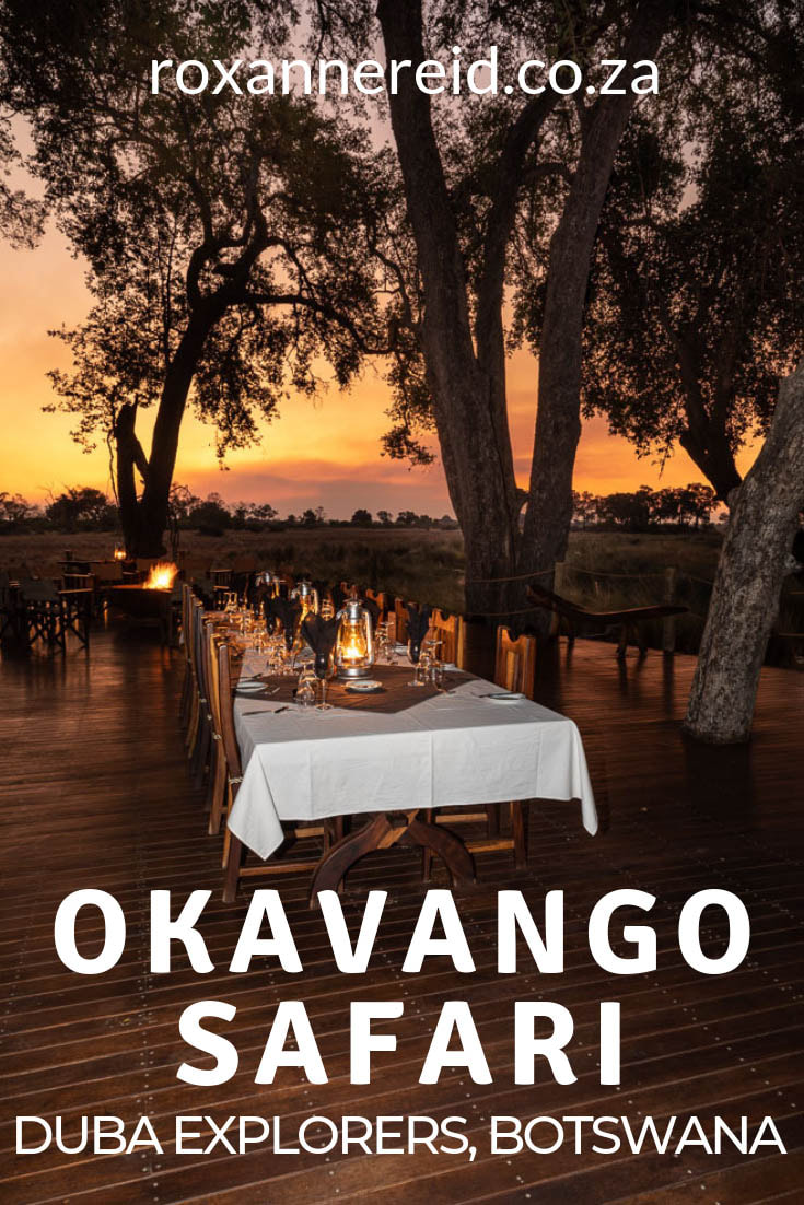 Are you planning an Okavango Delta safari in Botswana? Find out why to include Duba Explorers Camp as one of your Okavango Delta lodges. This is luxury camping Botswana, where you can go on game drives to see wildlife like elephant, buffalo, lion and leopard, on a mokoro safari or a walking safari. Enjoy good food and glamping on your Okavango safari. #safariBotswana #okavangodeltaholidays