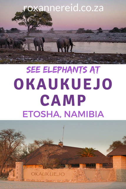 Want to see elephants on your Etosha safari? Find out why the Okaukuejo waterhole at Okaukuejo rest camp in the Etosha National Park, Namibia, is a good bet in the dry season. #Okaukuejo #Okaukuejorestcamp #Okaukuejoresort #OkaukuejocampEtosha #Okaukuejocamping #Okaukuejocampsite #Okaukuejocamp #Namibia #africantravel #elephants #safari #wildlife