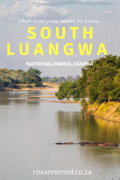 What everyone needs to know about South Luangwa National Park, Zambia #africa #travel #safari