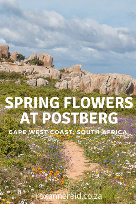 Spring flowers at Postberg in the West Coast National Park #WestCoast #South Africa #travel
