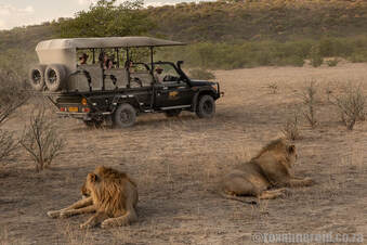 Lions at Ongava Game Reserve bordering Etosha National Park