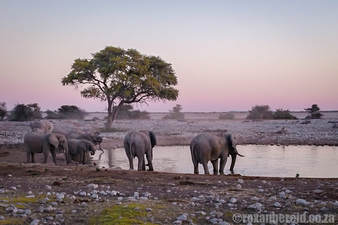 Places to visit in Namibia: Etosha National Park