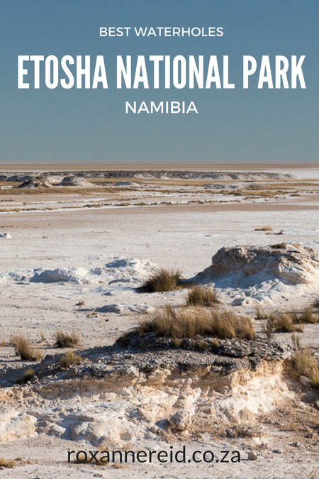 Visiting Etosha National Park in Namibia? Here's a list of 12 of the best waterholes at Etosha National Park and why you should visit all of them to see a wide variety of wildlife from elephants to lions and antelope. #Etosha #nationalparks #namibia #wildlife