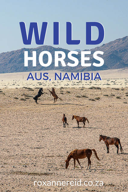 Why to visit the wild horses at Garub near Aus in Namibia #horses #travel #Africa