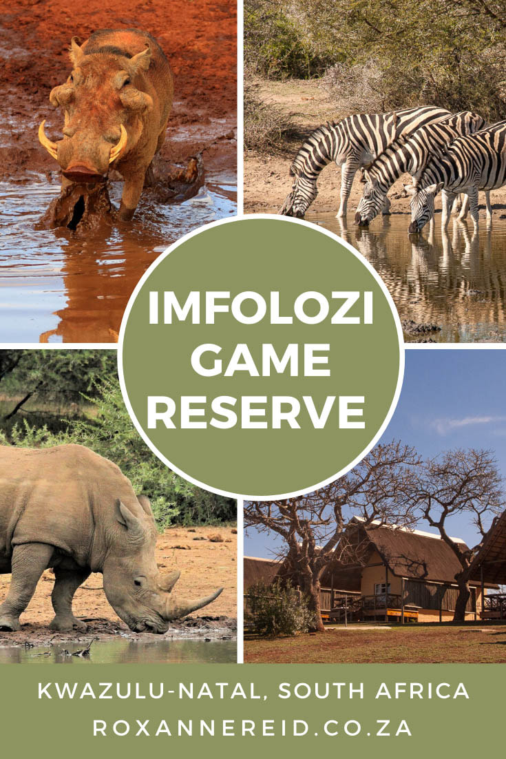Visit Imfolozi Game Reserve in KwaZulu-Natal, South Africa, to see the Big Five, cheetahs and wild dogs #wildlife #safari #wilderness