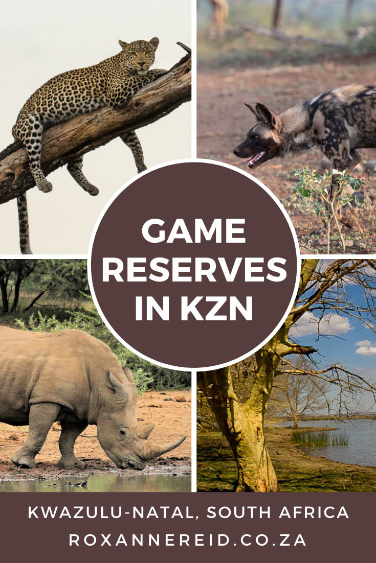 Visiting Northern KwaZulu-Natal in South Africa? Here are some game reserves in KZN you shouldn't miss when planning your wildlife safari. Find out more about Hluhluwe-Imfolozi Park, Ithala Game Reserve, isiMangaliso Wetland Park, Mkhuze Game Resrve, Ndumo Game Reserve, Tembe Elephant Park, Pongola Game Reserve, Manyoni Game Reserve, Phinda Game Reserve, Amakhozi Game Reserve and Thanda Safari Game Reserve.