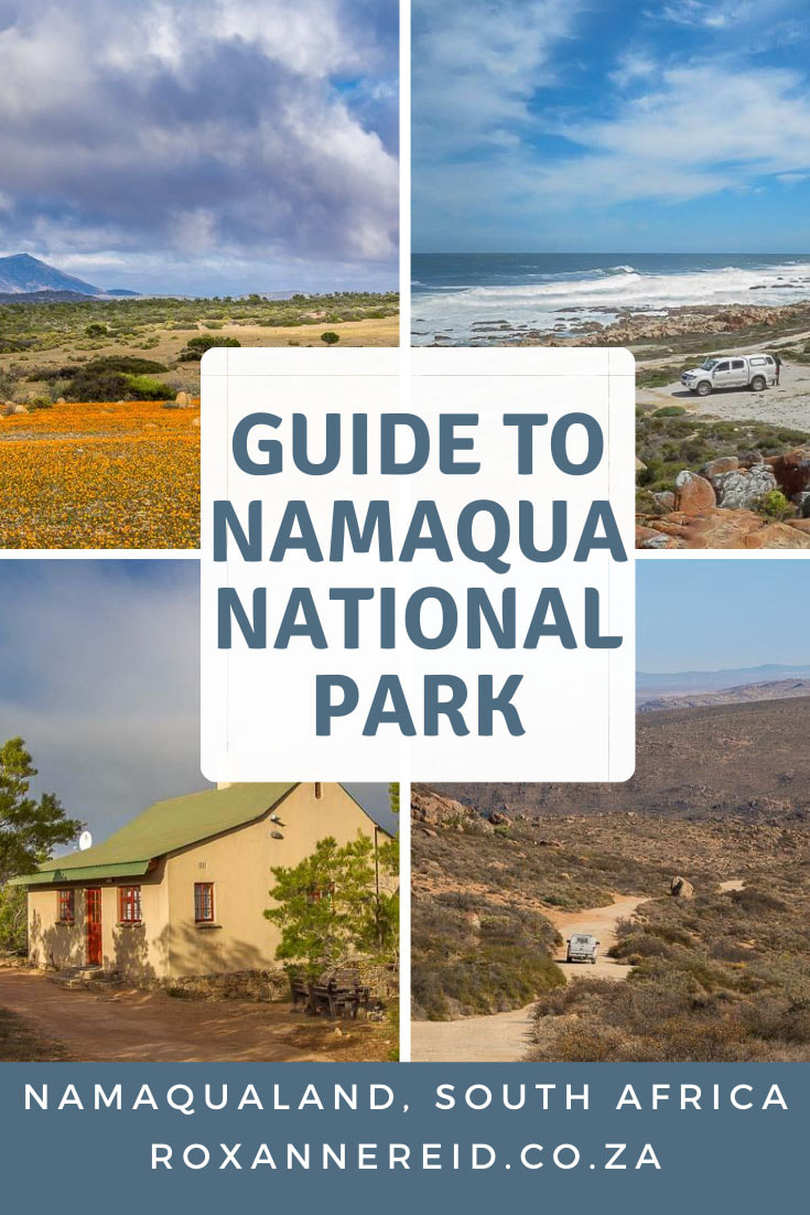 Visiting Namaqualand? Here's everything you need to know about Namaqua National Park, including Namaqualand flowers, Namaqua National Park accommodation and camping, getting there and getting around, best time to visit. Find things to do like seeing the carpets of flowers in spring, quiver trees, beach camping in the coastal section, Caracal 4x4 Eco-Route, hiking trails, animals and local people.