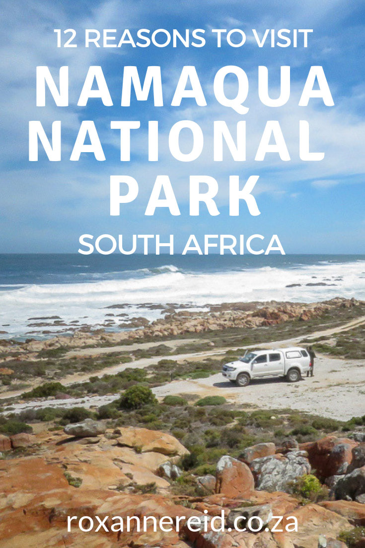12 reasons to visit Namaqua National Park in the Northern Cape, South Africa; it's not all about spring flowers – discover where to go camping by the sea or glamping among the flowers, discover caves, sand dunes, dolphins, oystercatchers, go hiking, mountain biking or on a 4x4 trail, find animals and quiver trees. Find peace and tranquility too. #Namaqualand #nationalparks