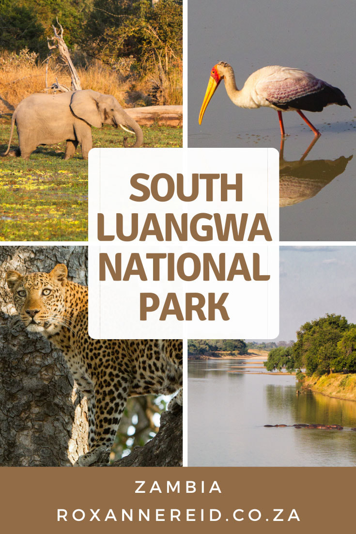 What everyone needs to know about South Luangwa National Park, Zambia #africa #safari