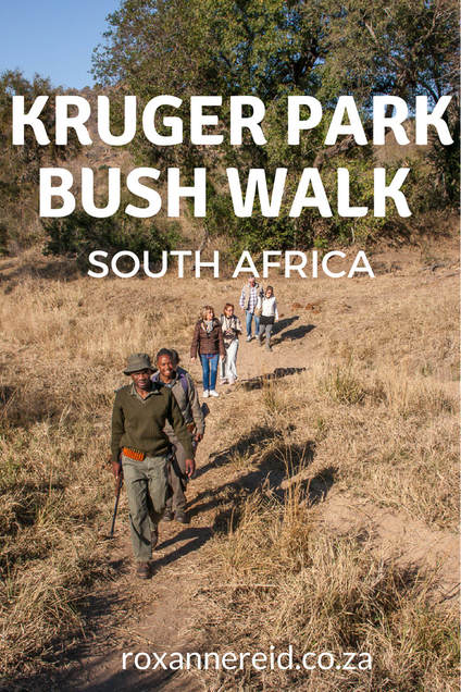 Why to join a guided bush walk in Kruger National Park #SouthAfrica #travel #safari #wildlife