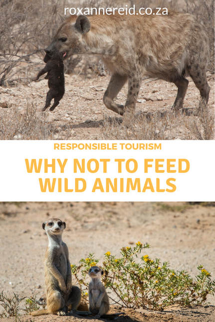 Why not to feed wild animals #Responsibletravel #wildlife #travel
