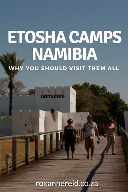 Why you should visit these three camps at Etosha National Park, Namibia #africa #safari #travel