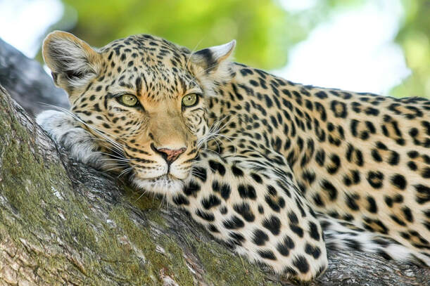 Game reserves in KZN for a South African safari