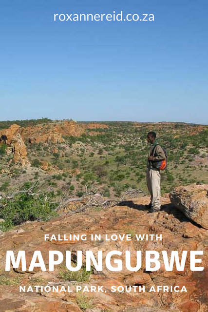 How to fall in love with Mapungubwe National Park, Limpopo #SouthAfrica #travel #culture