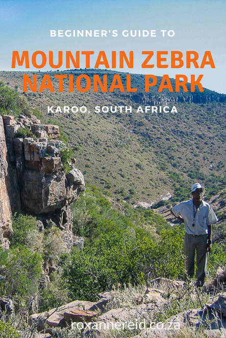 Beginner's guide to the Mountain Zebra National Park #SouthAfrica #safari #travel