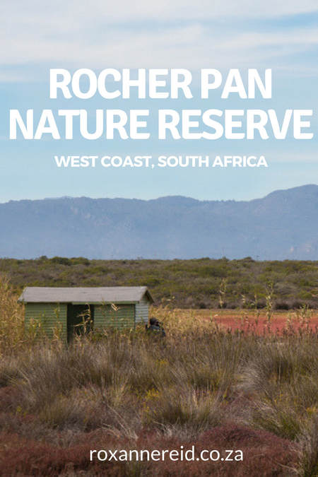 Why to visit Rocher Pan Nature Reserve on the Cape West Coast #SouthAfrica #travel #nature