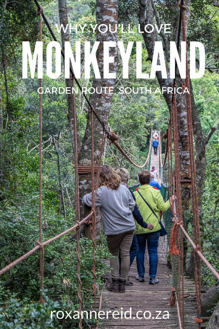 Why you'll love Monkeyland near Plettenberg Bay on the Garden Route, South Africa