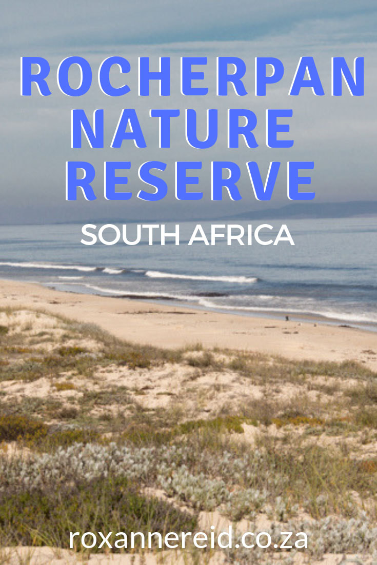 Find out why to visit Rocherpan Nature Reserve on the Cape West Coast, South Africa, for Rocherpan accommodation in lovely eco-cabins, walks along the beach, hiking trails, birding in bird hides along the edge of the pan or along the coastline. #Rocherpan #RocherpanNatureReserve #nature