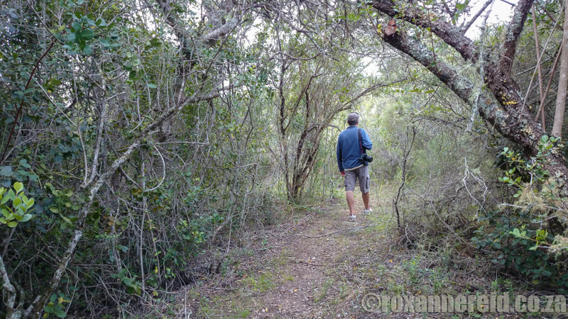 Highlights of the Garden Route - walks through the forest