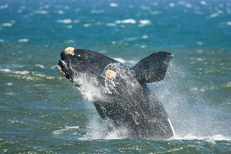 Things to do in Stanford Western Cape: whalewatching