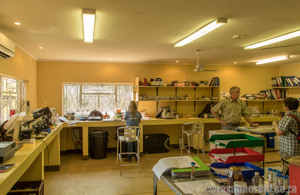 Victoria Falls Wildlife Trust's diagnostic laboratory
