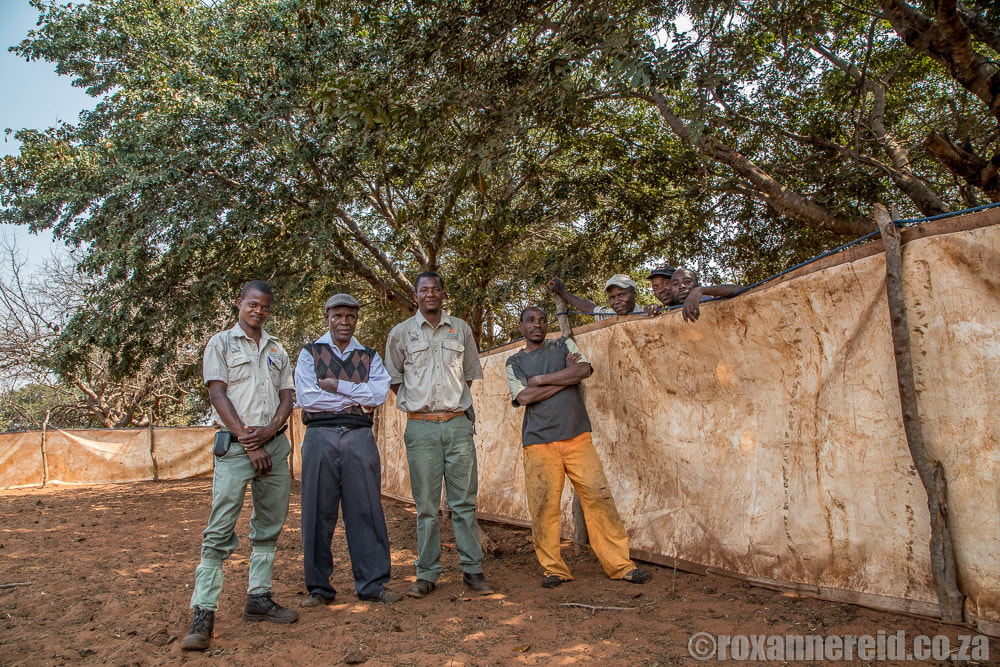 Community guardians and mobile bomas doing good work in conservation, Zimbabwe