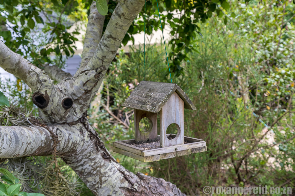 Bird feeder, The Earthy Inn, Greyton, Overberg