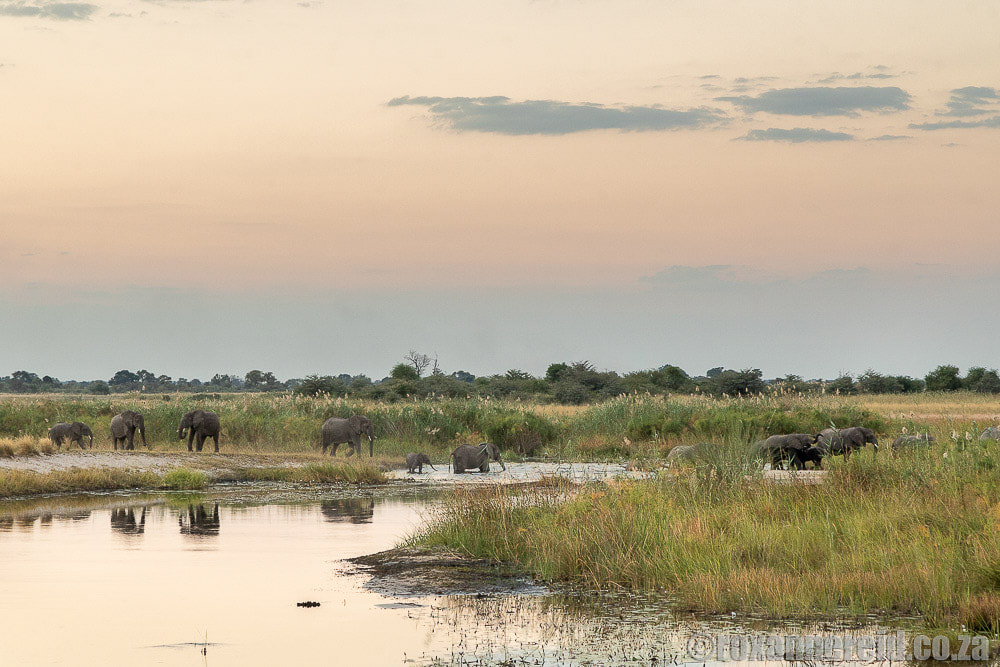 Elephants crossing river at Bwabwata National Park