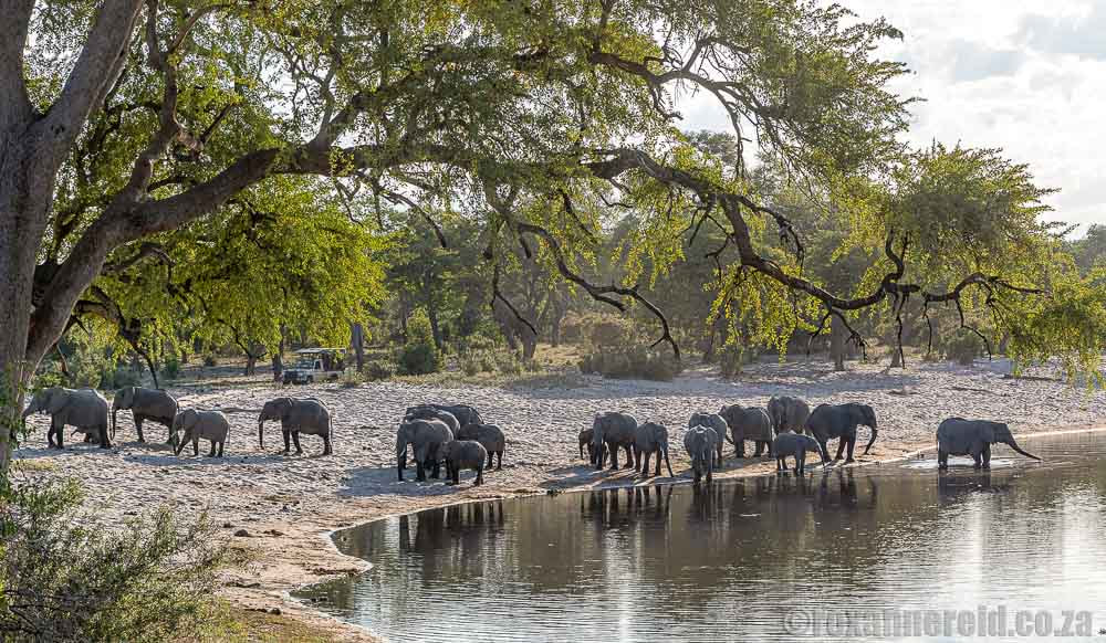 Elephants at Horssehoe Bend, Bwabwata National Park, Namibia