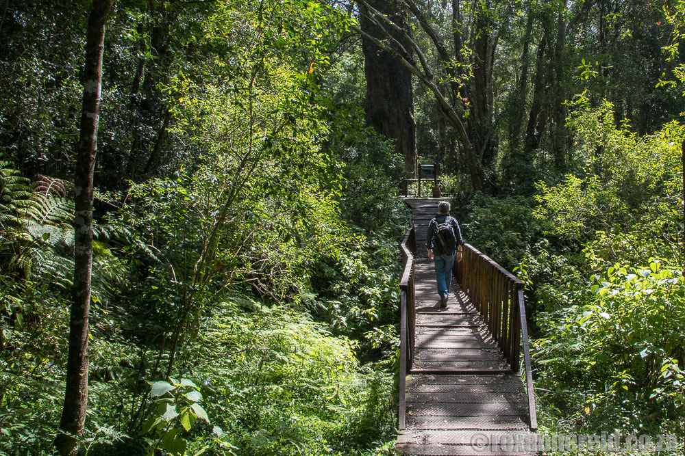 What to do in Wilderness: walk in the forests