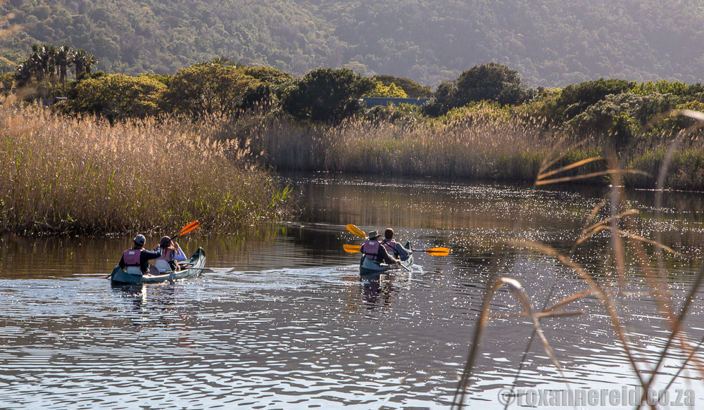 Things to do in Wilderness South Africa: paddle a canoe