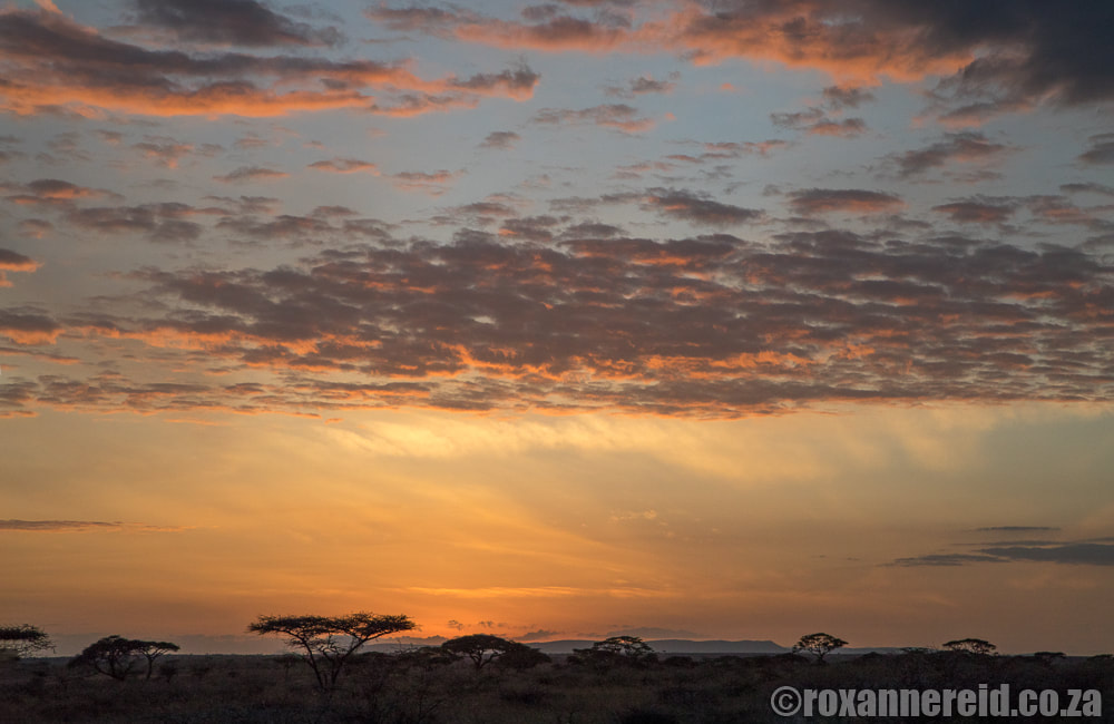 Sunset, Serengeti National Park, Tanzania