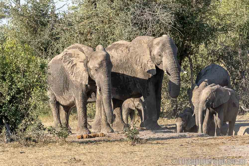 Elephants, Bwabwata National Park, Namibia