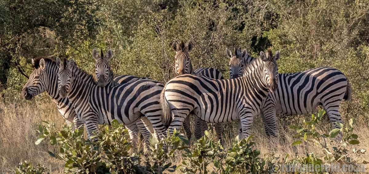 Namibia safari at Bwabwata National Park