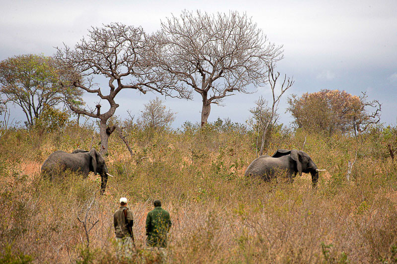 Tracking elephants at Londolozi in the Sabi Sands, Greater Kruger Park