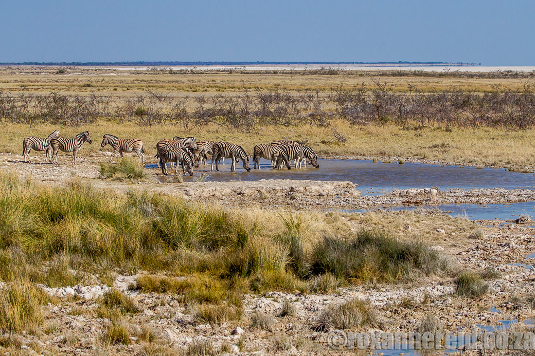 Salvadora and Charitsaub, 12 of the best waterholes at Etosha National Park, Namibia