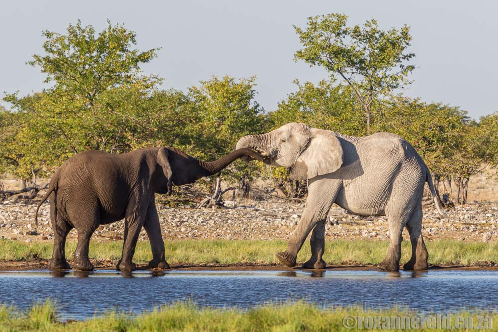 Is Namibia safe? Give elephants space