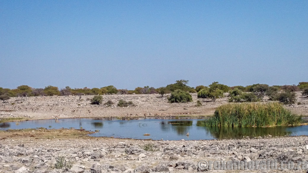 Homob, 12 of the best waterholes at Etosha National Park, Namibia