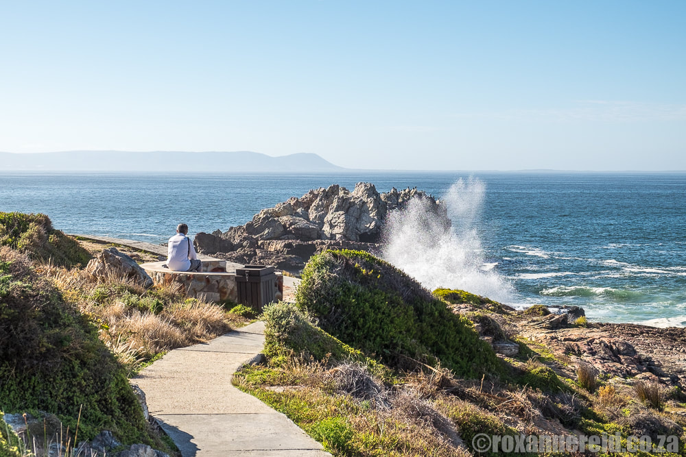 WHat to do in Hermanus - walk the cliff path