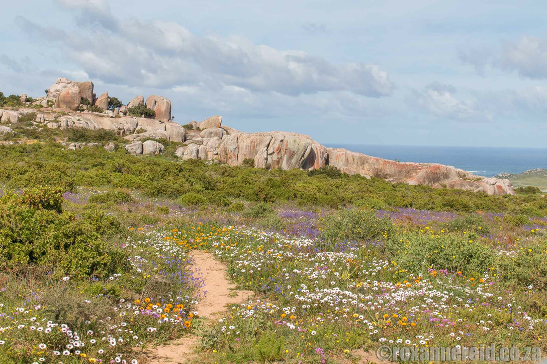Visit West Coast National Park on your way to Paternoster
