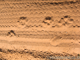 Tracks in the sand, Kalahari