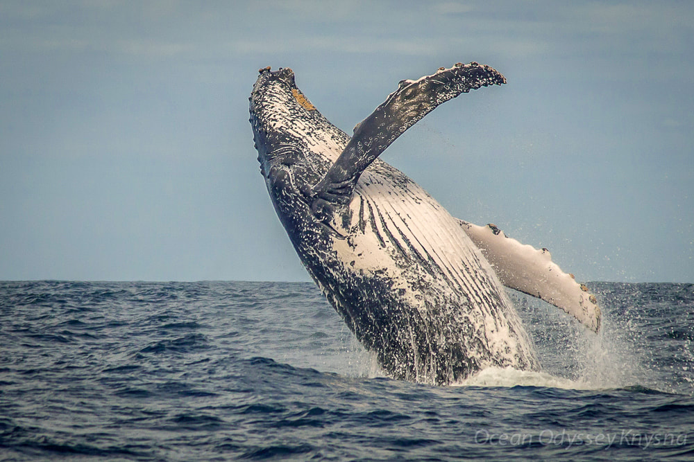 Things to do in Wilderness on the Garden Route: whale-watching