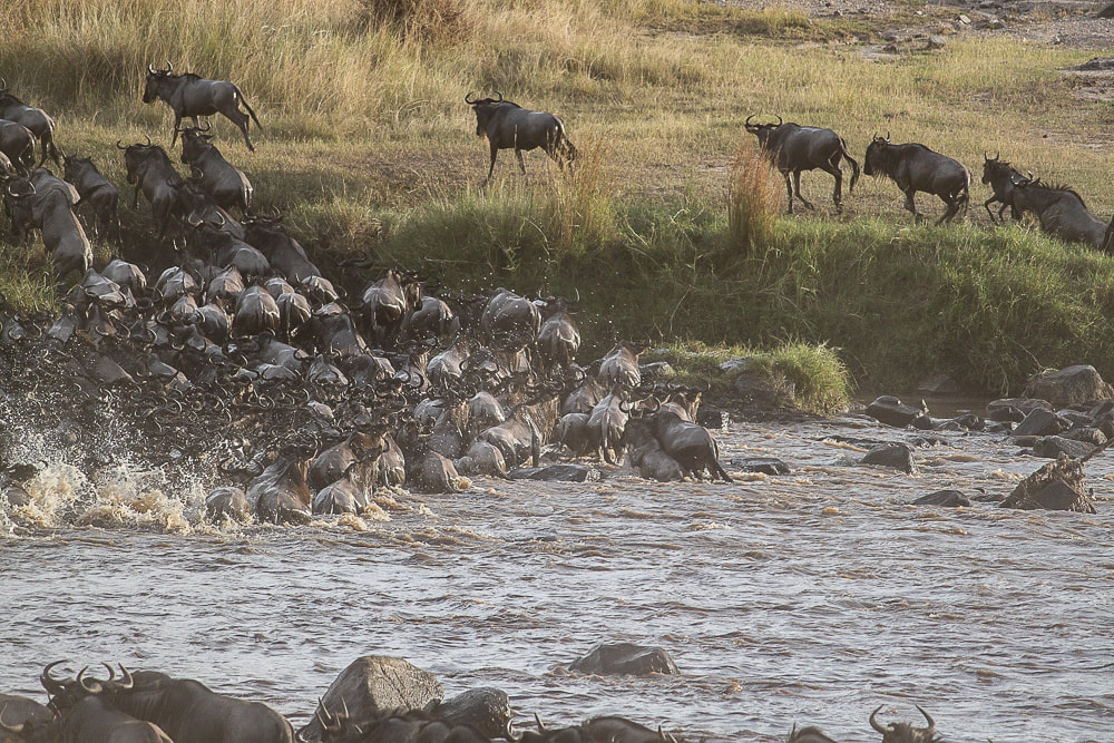 Wildebeest migration, things to do in the Serengeti in Tanzania