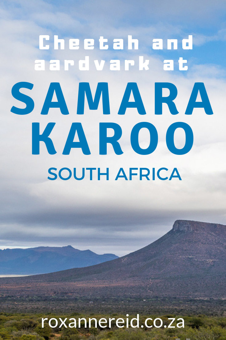 Visit Samara Private Game Reserve near Graaff-Reinet in the Eastern Cape Karoo and have the thrill of tracking cheetah and aardvark on foot. The reserve also has elephant and lion. #safari #tracking #Karoo #EasternCape #SouthAfrica #wildlife #Samara